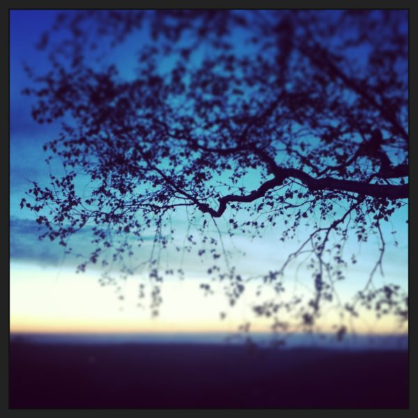 Blue trees 1829