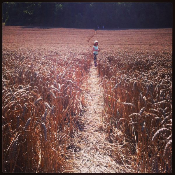 Corn path 2522