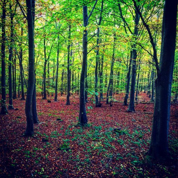 Seven woods 2