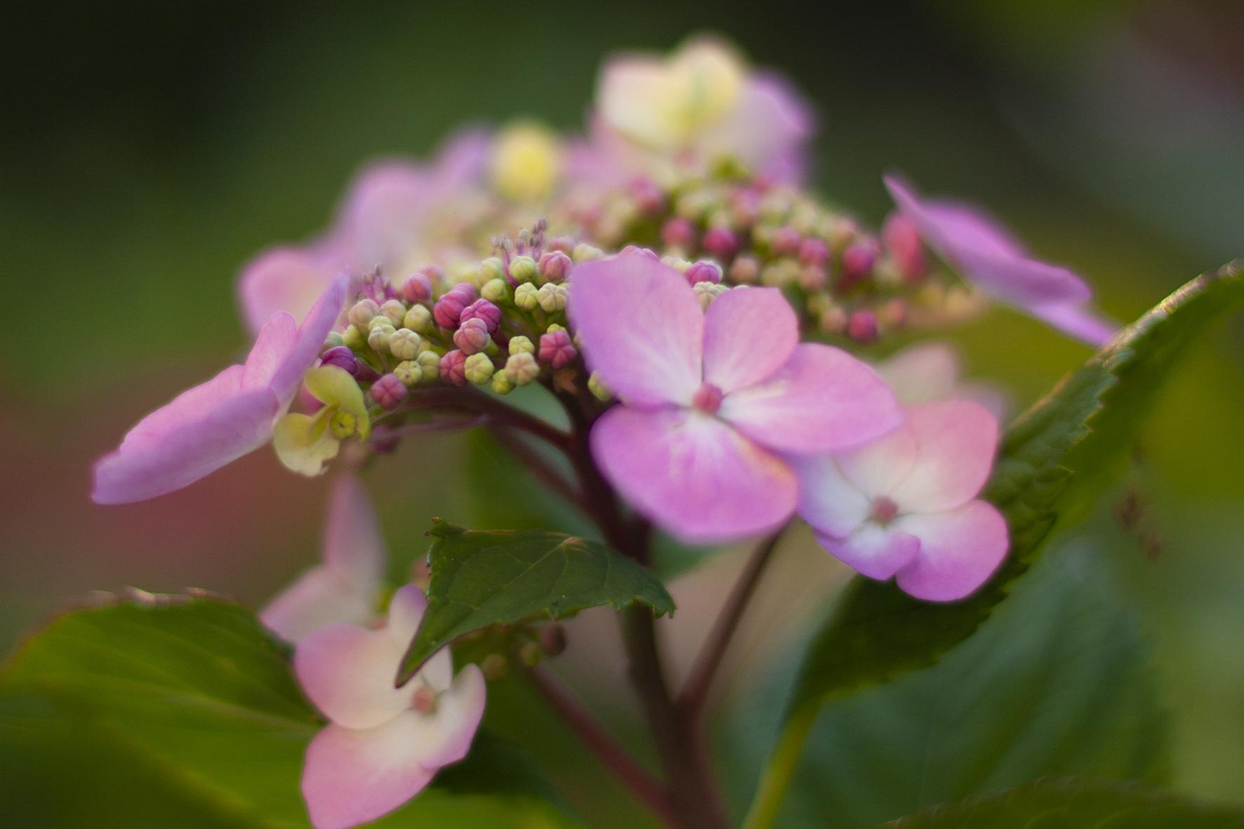 JSP Flower 102